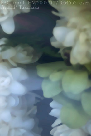 武中 あゆみ / Ayumi Takenaka